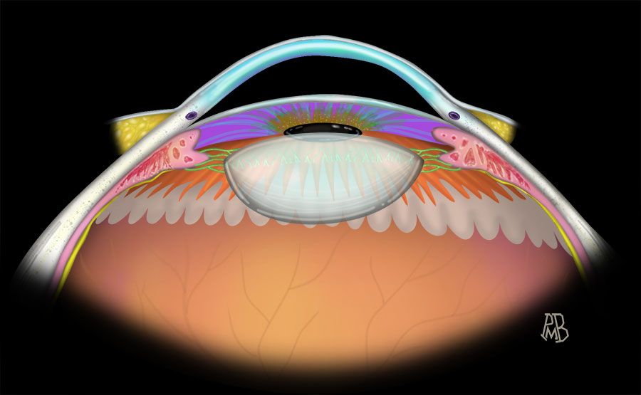 Anatomy Eye Anterior